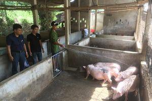 Tái đàn lợn theo hướng đảm bảo an toàn sinh học