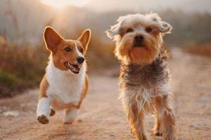 Phát hiện khả năng đặc biệt của chó mà loài người mơ ước