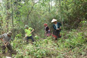 Chi trả dịch vụ môi trường rừng - Bài cuối: Sức mạnh từ sự đoàn kết giữ rừng