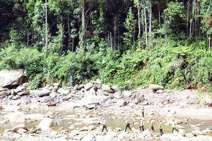 Khó khăn khi giao rừng ở Lào Cai