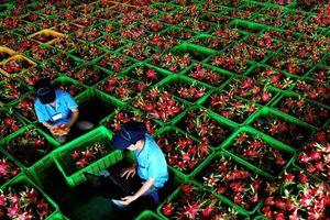 Thông quan điện tử giúp nông sản Việt Nam tươi hơn khi đến New Zealand