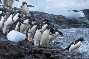 Cuộc sống chim cánh cụt ở Nam Cực qua những góc ảnh độc lạ