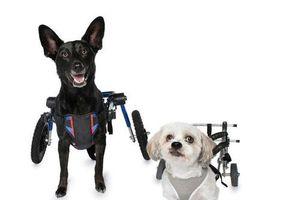 11 chú chó khuyết tật sẵn sàng truyền cảm hứng sống cho bạn