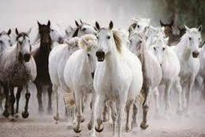 Covid-19: Argentina thử nghiệm lâm sàng thuốc từ huyết thanh ngựa