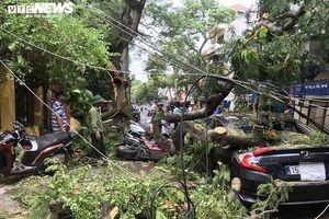 Cây phượng hơn 70 tuổi đổ gục, đè bẹp nhiều ô tô, xe máy trên phố Hải Phòng