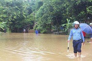 Mưa lớn khiến hơn 230 ha lúa tại tỉnh Tuyên Quang bị ngập úng