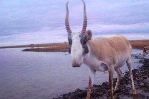 'Bẫy ảnh' chụp được loạt động vật quý hiếm nhất thế giới