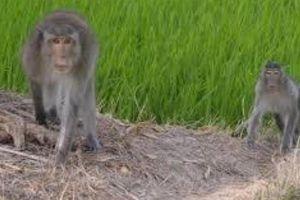 Chấm dứt dự án du lịch kết hợp nuôi động vật hoang dã ở Cà Mau
