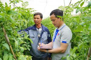 Chuỗi nông sản an toàn: Giải 'bài toán' cung cầu nông sản