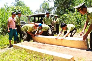 Phối hợp bảo vệ rừng tại các xã cánh tây