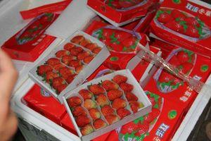 Dâu tây Trung Quốc nhập lậu có dư lượng thuốc bảo vệ thực vật cao