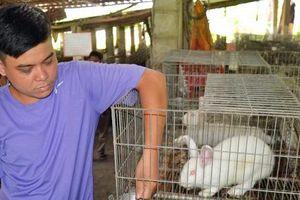 Tú 'thỏ' và câu chuyện về trang trại 2.000 thỏ giống New Zealand