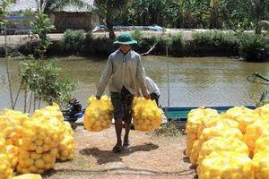 Khai trương sàn giao dịch điện tử sản phẩm nông nghiệp Kiên Giang