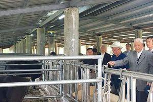 Cựu lãnh đạo Đài Loan & giấc mơ 'Wagyu hóa đàn bò'