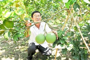 Khánh Vĩnh: Tập trung hình thành các vùng chuyên canh lớn