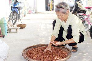 Ký ức vùng trồng cau Phú Hội
