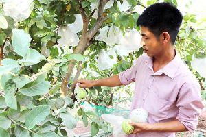 Nông nghiệp không… chất thải