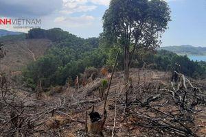 Đề nghị xử lý kỷ luật cán bộ liên quan vụ phá gần 2 ha rừng đầu nguồn