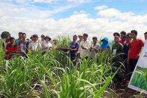 Hơn 1.000 nông dân phấn khởi cùng nâng tầm mía Việt