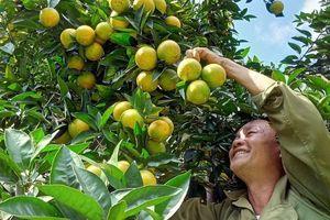 Người dân Sơn La thu nhập hàng tỷ đồng mỗi năm nhờ cây ăn quả