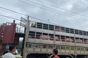 Lợn thịt từ Thái Lan liên tục được nhập về