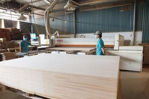 Sẽ đối thoại với DN về việc áp dụng mã với nhóm các mặt hàng gỗ cao su XK dạng tấm