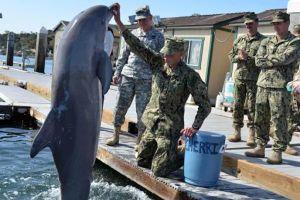 Địa Trung Hải 'dậy sóng' khi Nga đưa biệt đội cá heo đến Syria