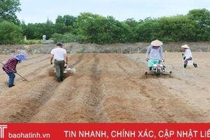 Nông dân Cẩm Xuyên hối hả khôi phục vườn rau sau mưa lớn