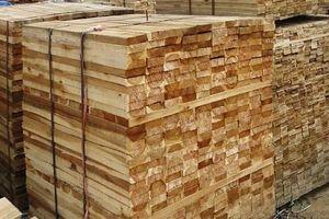 Bộ trưởng Bộ Tài chính chỉ đạo kiểm tra việc áp mã HS đối với gỗ cao su xuất khẩu