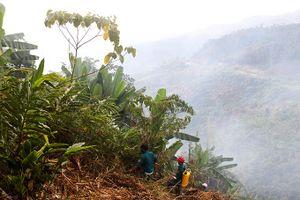 Khánh Vĩnh: 18ha rừng trồng bị phát dọn trái phép