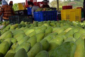 Thu nhập tiền tỷ từ cây ăn quả