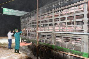 Khi nào giá thịt lợn hết đắt đỏ?