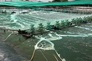 Xuất khẩu thủy sản: Hy vọng từ những tín hiệu tích cực