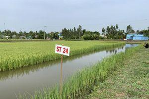 Sôi động chuyển đổi nông nghiệp vùng Bán đảo Cà Mau