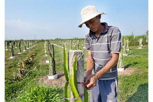 Tăng diện tích cây ăn trái và nuôi trồng thủy sản ở đồng bằng sông Cửu Long