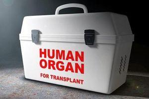 Làm thế nào bảo quản nội tạng để cấy ghép khi người hiến tạng qua đời?