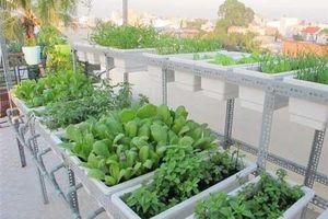 Hướng dẫn cách trồng rau trong thùng xốp đơn giản, an toàn nhất