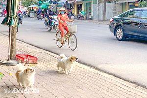 Chuyện nuôi thú cưng ở đô thị