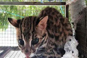 Yêu cầu trả động vật hoang dã về nơi xuất khẩu