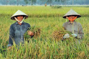 Việt Nam xuất khẩu gạo đứng thứ 2 thế giới