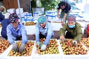 7 tháng, thặng dư xuất khẩu nông sản đạt 5,2 tỷ USD