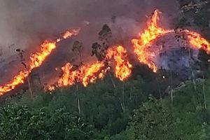 Nỗ lực khống chế cháy rừng tại Đà Nẵng