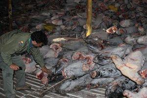 Tàu cá Trung Quốc bị tố 'vơ vét mọi thứ' gần quần đảo Galápagos