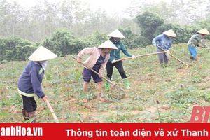 Hiệu quả hoạt động của các tổ hợp tác nông nghiệp