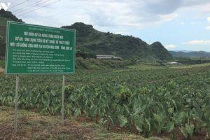Đất núi Sơn La hóa 'vàng' nhờ ứng dụng khoa học công nghệ