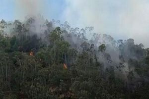 Đà Nẵng: Nỗ lực dập đám cháy rừng ở Hòa Vang
