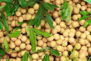 Nhãn tươi Việt Nam tiếp tục được xuất khẩu sang thị trường Australia