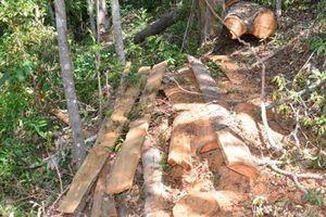 Khởi tố vụ án phá rừng