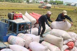 Covid-19 bủa vây, xuất khẩu gạo vẫn tăng gần 11%