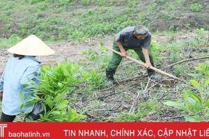 Sau những cơn mưa, người dân Vũ Quang nhanh tay phủ xanh rừng keo